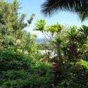 View from Jungle covered hillside near Hana