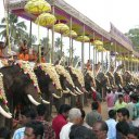 Kerala-Elephants-India