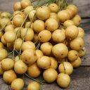 burmese-grape