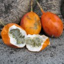granadilla-passion-fruit