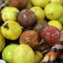 passionfruit-thailand