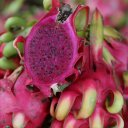 red-dragonfruit