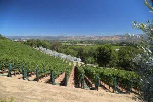 Napa-Valley-Hillside-View