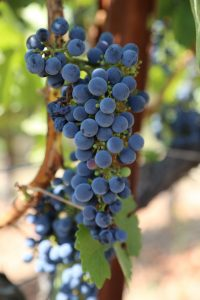 Ironstone-Grapes