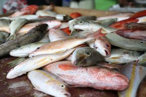 Fish-Lamu