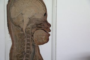 siriraj-medial-museum-bangkok-7