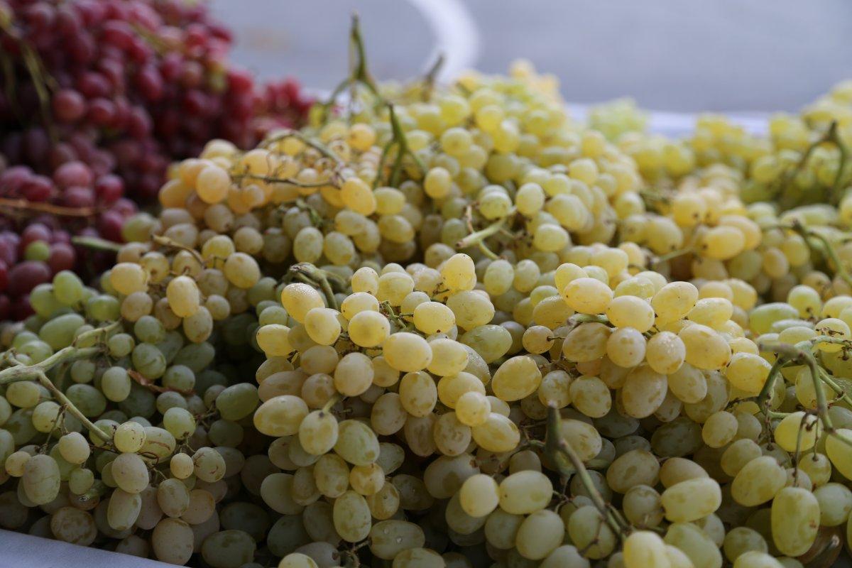 ripon-grapes