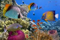 Palau Tops Scuba Diving Awards