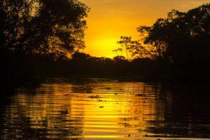 Fiery Orange Amazon Sunset