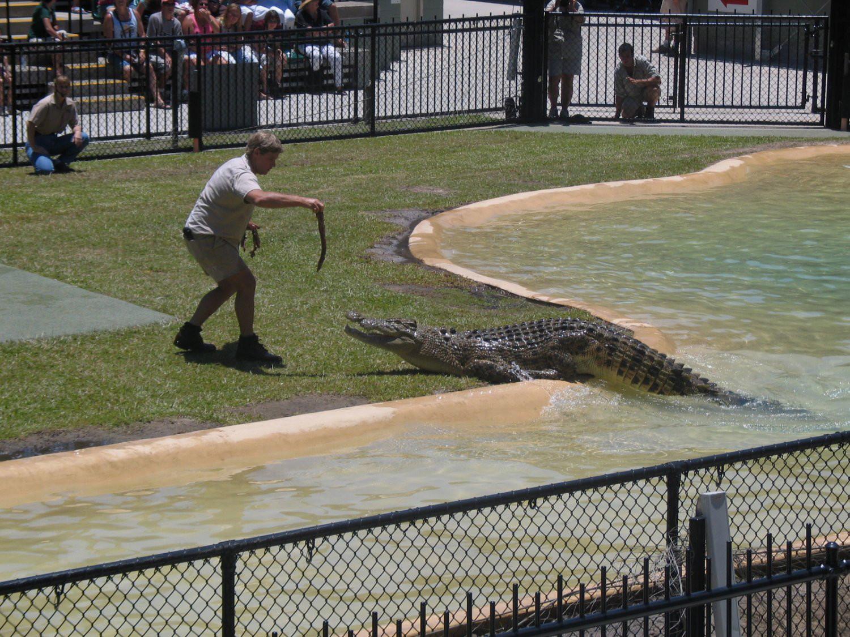 Steve-Irwin-Crocodile