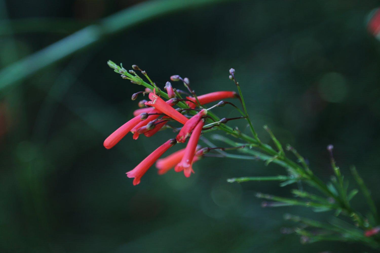 el-salv-flower