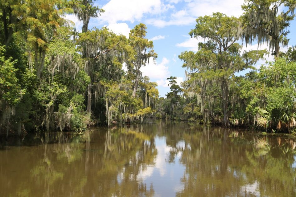 McGees-Swamp (1)