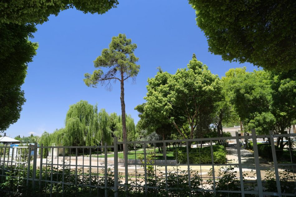 iran-trees
