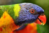 Tourism Queensland Introduces New Facebook Application