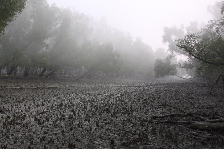 sundarban-mist-mud