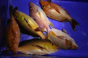 fishing-maldives