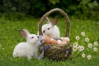 Hotels Club Easter Contest