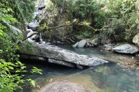 Puerto Rico's El Yunque National Forest in New Seven Wonders of the World Campaign