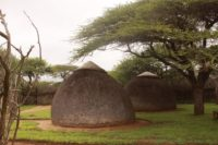 Nisela Safari Lodge Swaziland!
