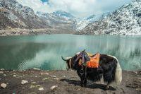 Possible Himalayan Trek to Sikkim