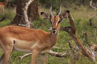 Hlwane National Park Swaziland