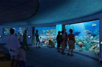 National Aquarium, Baltimore new Blacktip Reef Exhibit to Open