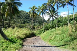 maui-hawaii (3)