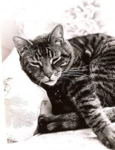 cat-austin