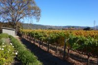 On Location at the Napa Valley Film Festival