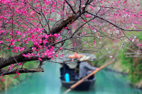 Plum Blossoms Mark a Spring of Festivals & Events in Hangzhou China