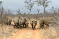Experience Swaziland – May 2014