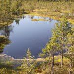 bog-lake-adventures (1)