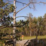 bog-lake-adventures (2)