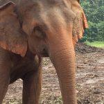 Pinnawala-Elephant-Orphanage (5)