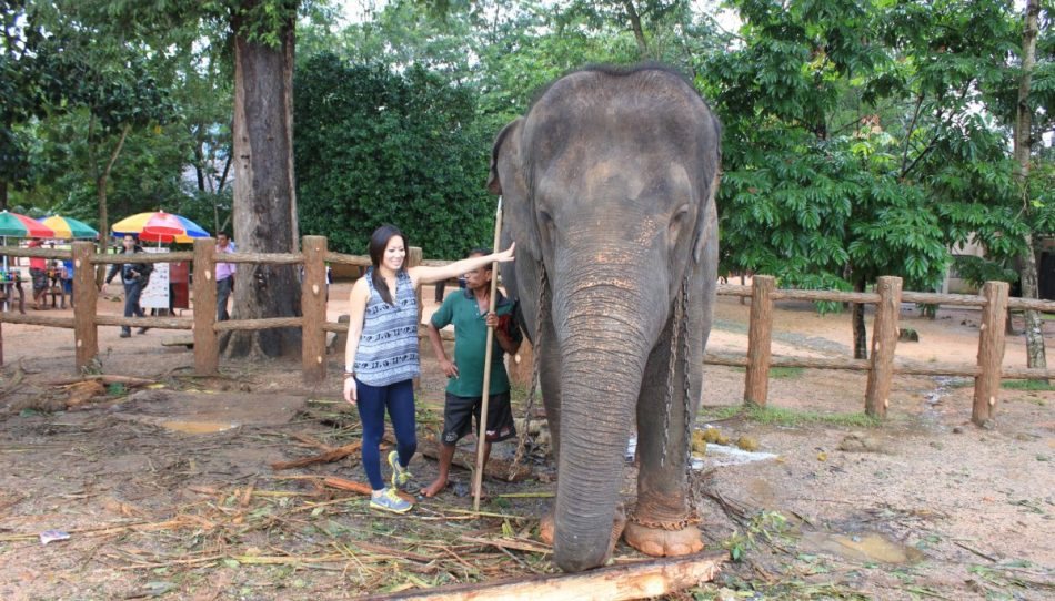 Pinnawala-Elephant-Orphanage (9)