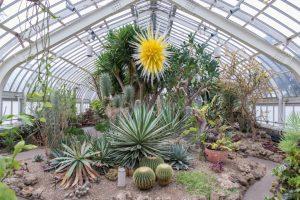 USA - Pittsburgh - Phipps Conservatory and Botanical Gardents - Desert Room_CREDIT Paul g. Wiegman - Salloum