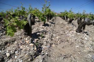 medoc-wine (4)