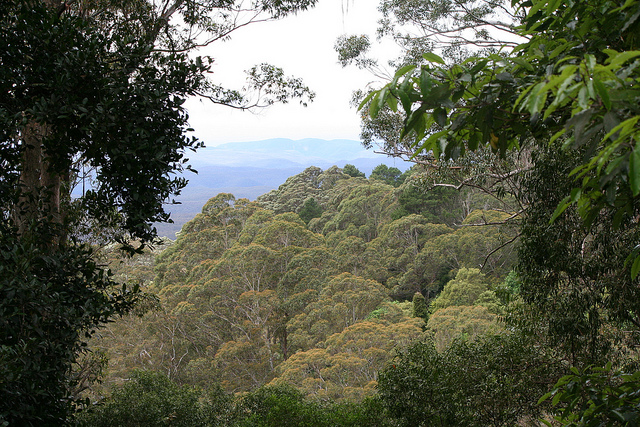 Botanic Garden Mount Tomah
