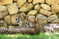 Zanzibar Attractions that Freddie Mercury Would Love