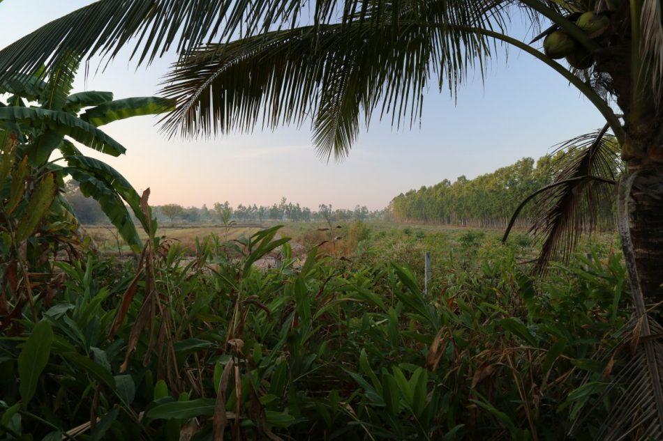 thailand (2)
