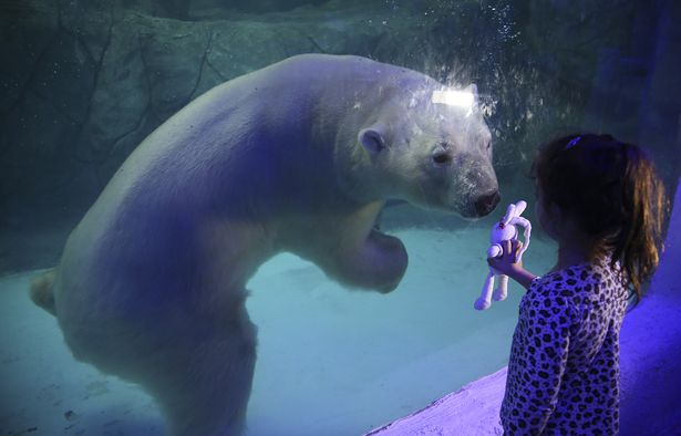 APTOPIX_Brazil_Polar_Bears