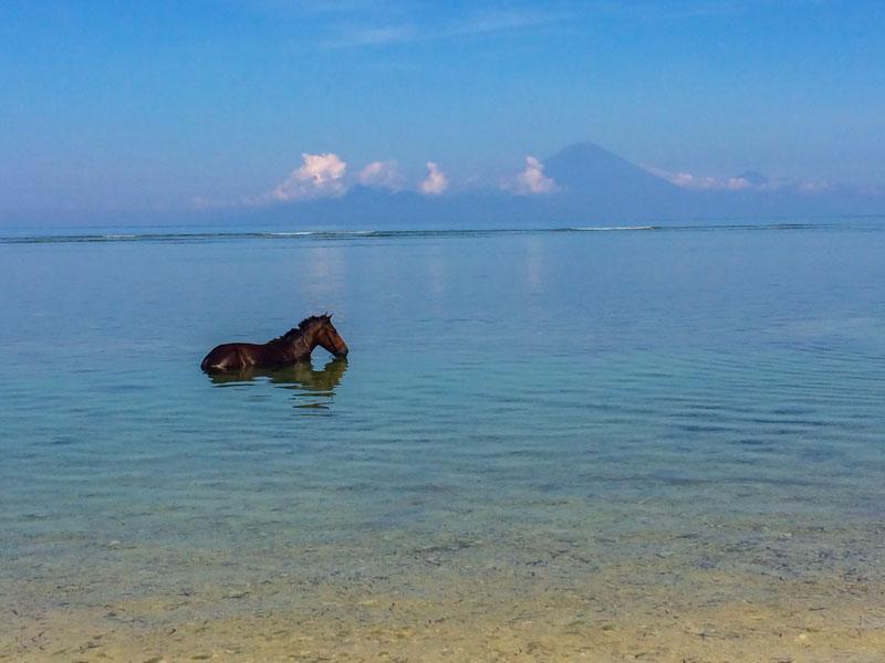 scuba-gili-island (19)