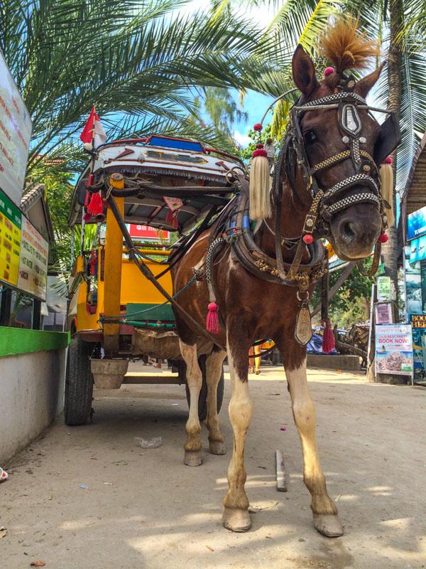 A horse cart on one of the Gili Islands: Gili Trawangan