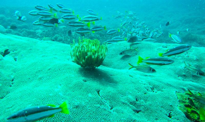 scuba-gili-island (4)
