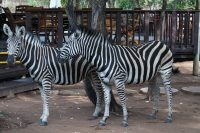 Discovering the Kruger National Park