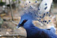 Port Moresby Nature Park- Papua New Guinea – August 2015