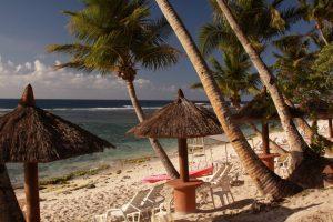 Guam-Palms