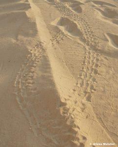casamagna-marriott-cancun-baby-turtle-tracks