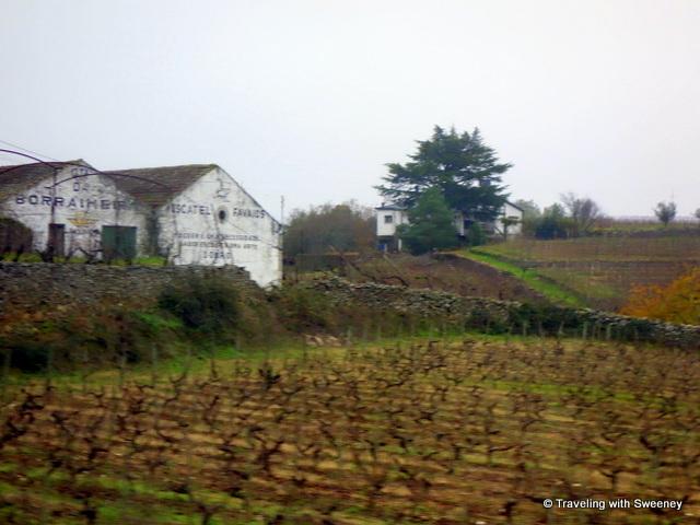 A moscatel wine estate in Favaios, Portugal