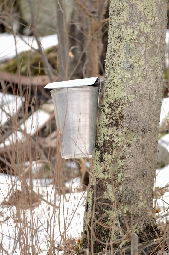 connecticut-maple-syrup